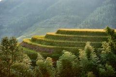 米露台的领域Wengjia longji龙胜湖南中国 免版税库存图片