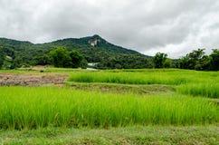 米领域农场 库存图片
