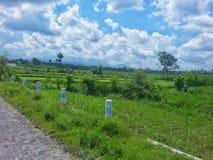 米领域印度尼西亚 库存照片