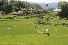 米领域和传统房子在塔娜Toraja, Sulewesi 免版税图库摄影