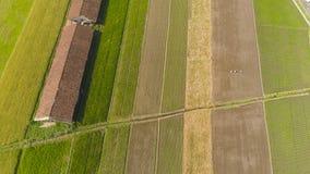 米领域和农田在印度尼西亚 免版税库存图片