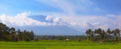 米领域和椰子树在东南亚 免版税库存照片
