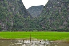 米领域和石灰石峭壁, Tam Coc,越南 免版税库存图片