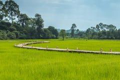米领域和长的竹桥梁 库存图片