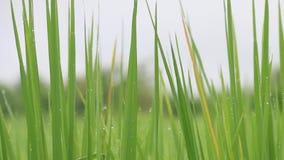 米领域和水下落 影视素材