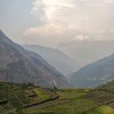 米领域在喜马拉雅山 免版税库存图片