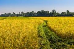 米领域在尼泊尔 图库摄影