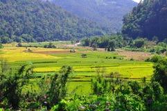 米领域在泰国 免版税库存图片