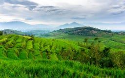 米领域在Sumedang,西爪哇省,印度尼西亚 免版税图库摄影