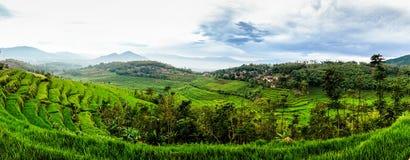 米领域在Sumedang,西爪哇省,印度尼西亚 免版税库存照片