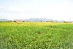 米领域或稻田 库存照片