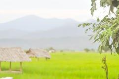 米领域或稻田 图库摄影