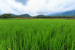 米领域有山和天空背景 库存照片