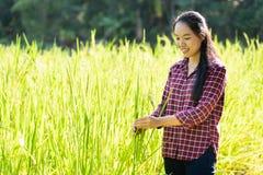 米领域的亚裔妇女农夫 免版税图库摄影