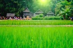 米领域的图象和选择聚焦有模糊的泰国房子背景 库存照片