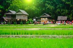 米领域的图象和选择聚焦有模糊的泰国房子背景 免版税库存图片