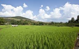 米领域绿色  免版税库存照片