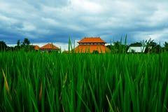 米领域绿草蓝天云彩多云横向背景 免版税库存图片