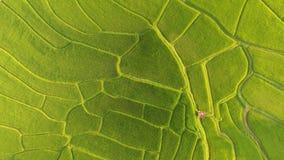 米领域美好的风景 免版税库存照片
