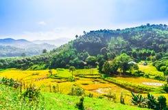 米领域风景清莱-泰国 库存照片