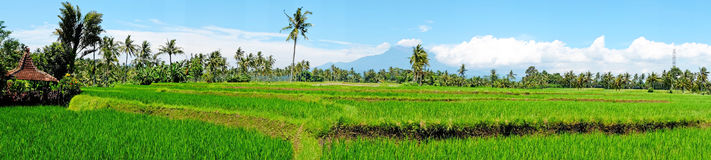 从米领域风景的全景在Java海岛,印度尼西亚上 免版税图库摄影