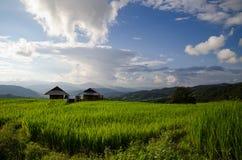 米领域,与美好的风景的农村山景 免版税库存照片