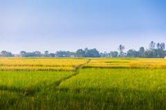 米领域,尼泊尔 免版税库存图片