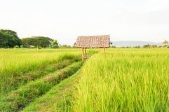 米领域,稻田 免版税库存照片