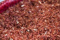 米,糙米,红色米 免版税库存图片