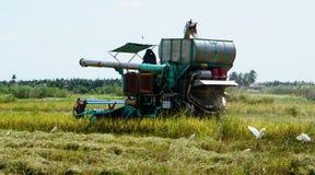 米组合harveste 库存图片