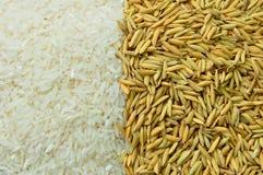 米&稻 免版税库存图片