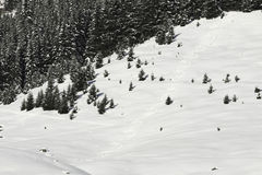 粉末滑雪雪跟踪 库存照片
