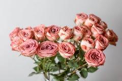粉状桃红色颜色 花分支上升了,芽,特写镜头 库存图片
