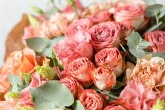 粉状桃红色颜色 花分支上升了,芽,特写镜头 图库摄影