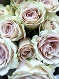粉红彩笔玫瑰 图库摄影