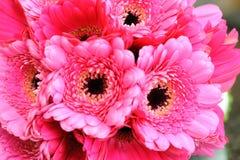 粉红色开花特写镜头 库存图片