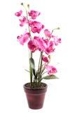粉红色斑纹的兰花花 库存照片