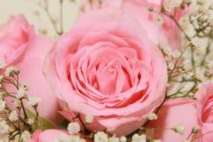 粉红色玫瑰背景  免版税库存照片