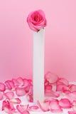 粉红色玫瑰色花瓶 免版税库存照片