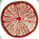 粉红色葡萄柚 免版税图库摄影