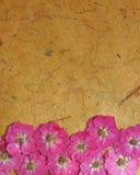 粉红色被按的玫瑰 免版税库存图片