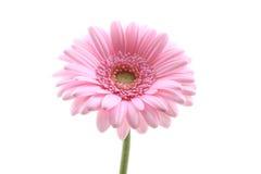 粉红色 库存照片