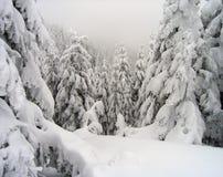 粗砺的冬天森林 库存照片