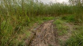 粗砺的泥泞的道路围拢与高绿色树和草-在雨以后的农村路 库存图片