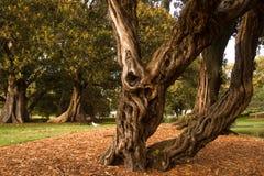 粗糙的老结构树在公园 免版税库存照片