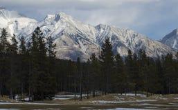 粗糙的高尔夫球冬天 库存图片