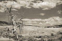 粗糙的死的树 图库摄影