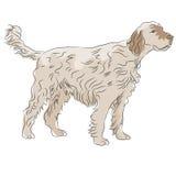 粗野的头发的狗 图库摄影