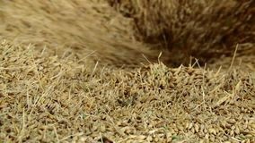粮仓 干燥五谷 玉米 燕麦 麦子农业文化特写镜头 股票视频