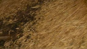 粮仓 干燥五谷 玉米 燕麦 麦子农业文化特写镜头 股票录像